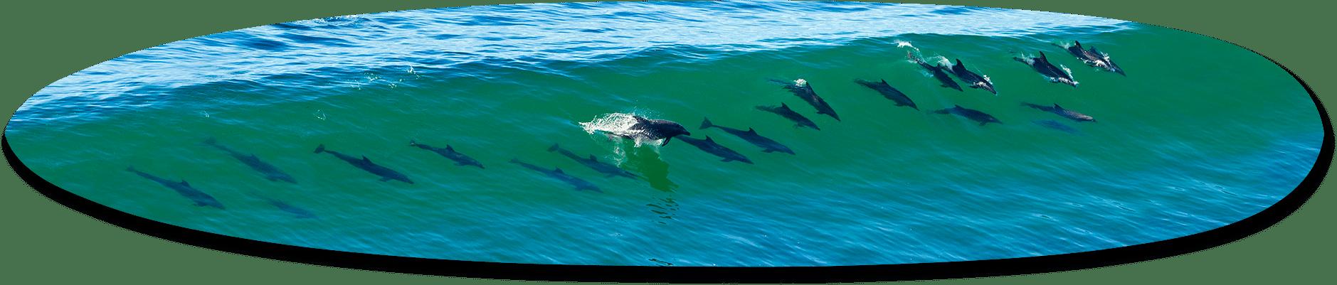 21 Dolphins, California