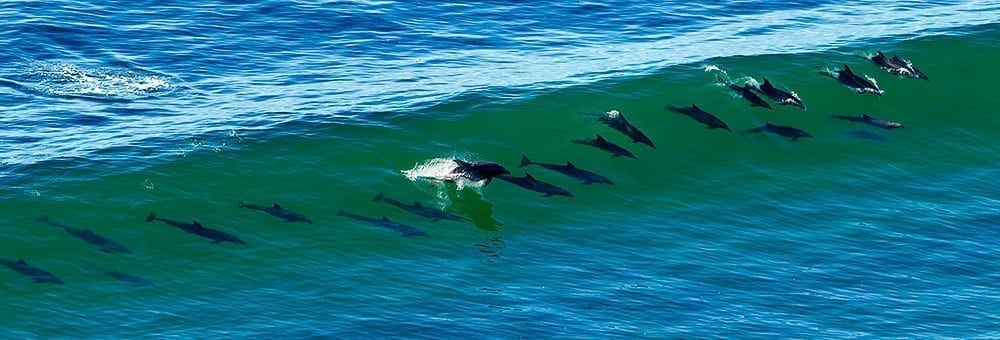 21 Dolphins