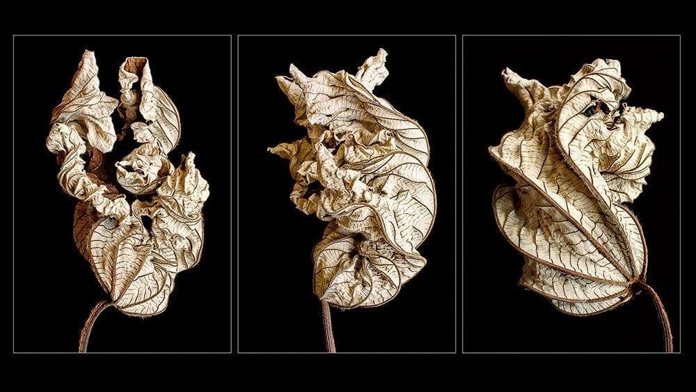 Grayumbo Triptych