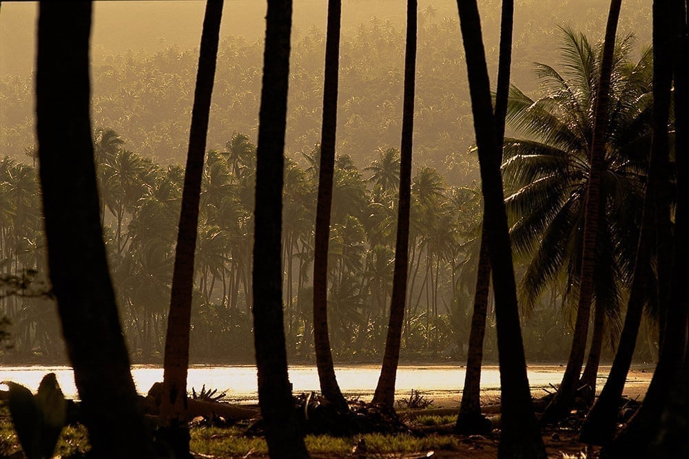 Huahine Palms