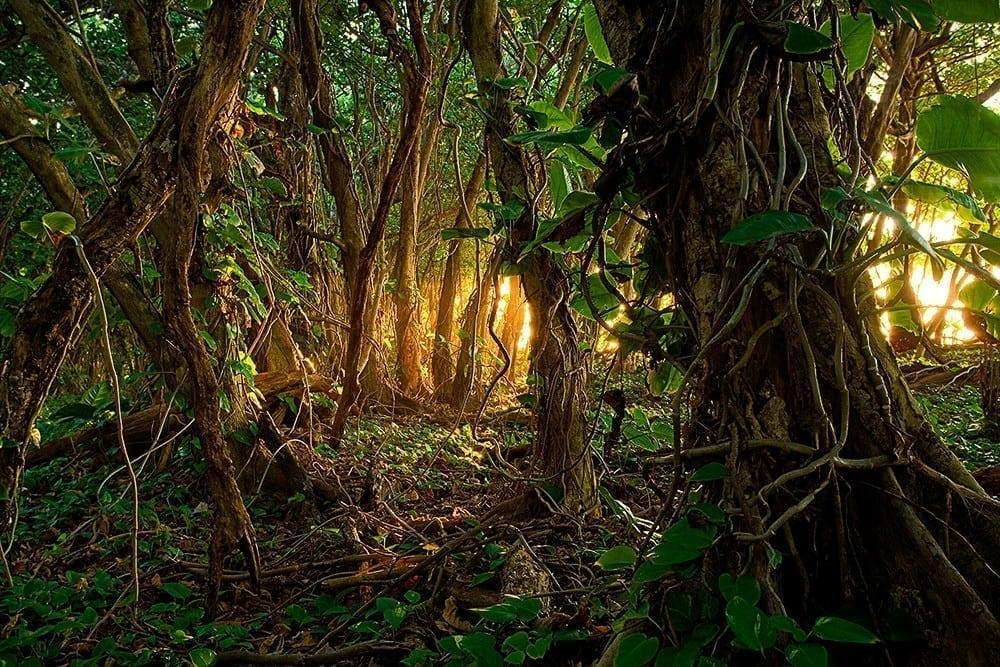 Haena Jungle Light